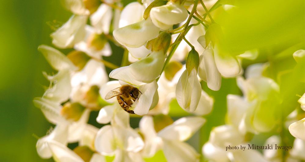 photo by Mitsuaki Iwago
